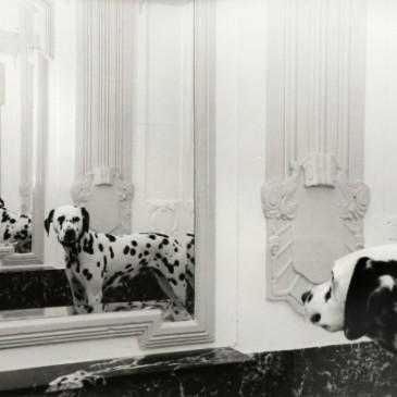Der Hund im Tempel der tausend Spiegel